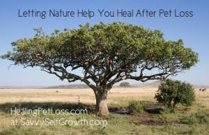 Serengeti-HealingPetLoss at SavvySelfGrowth LT